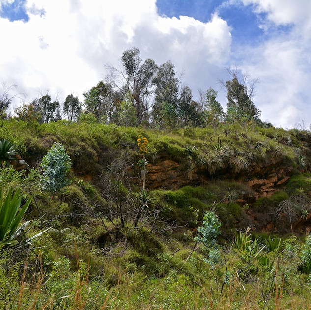 Colombia, Villa de Leyva; nature (2)