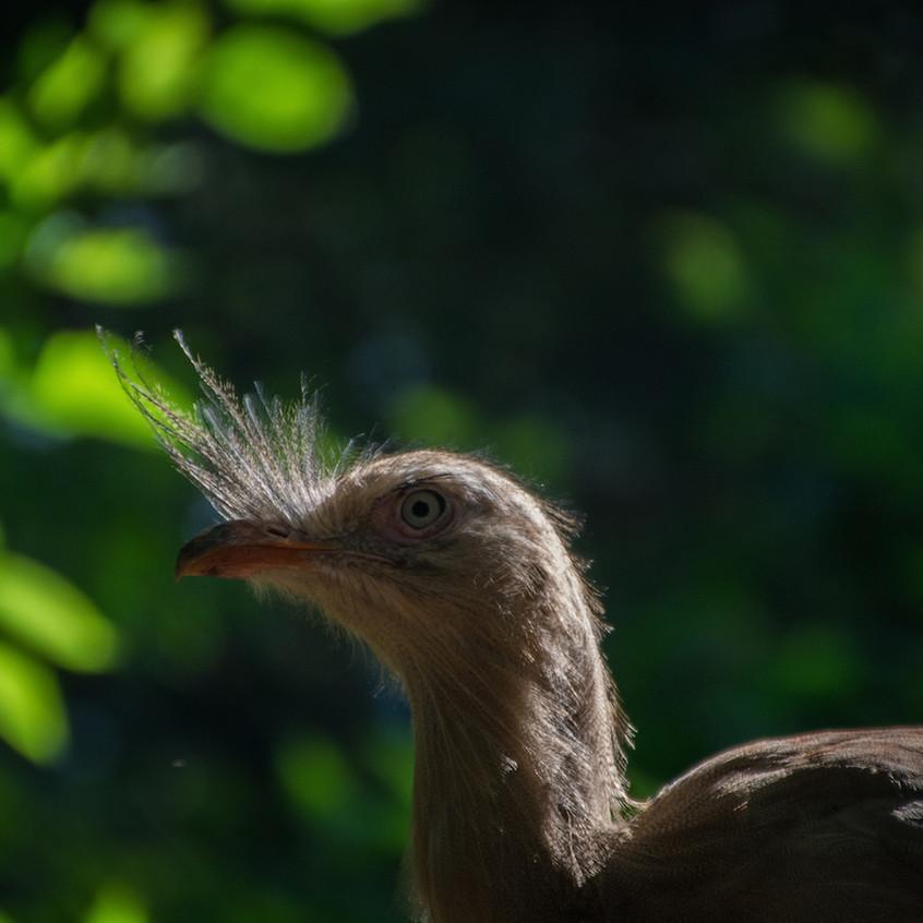 Brazil, Parque das Aves (3)