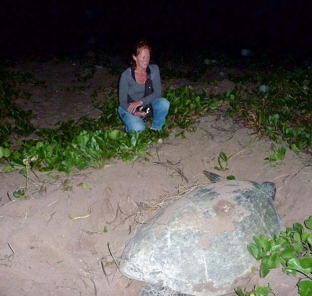Frans Guyana, Awala Yalimapo; The Green Turtle (4)