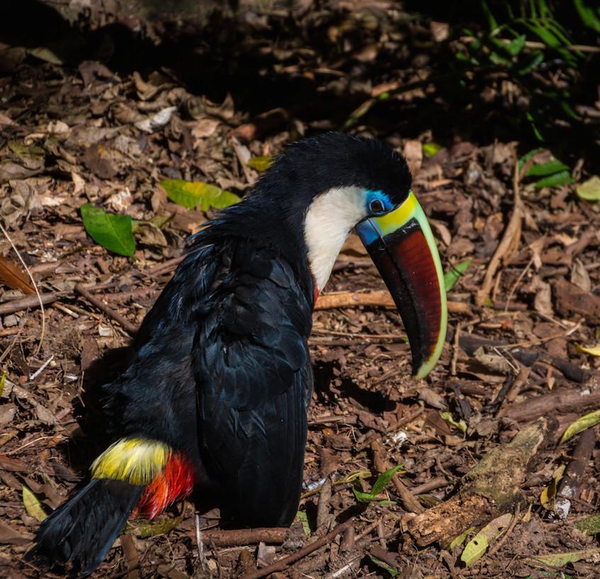 Brazil, Parque das Aves (2)