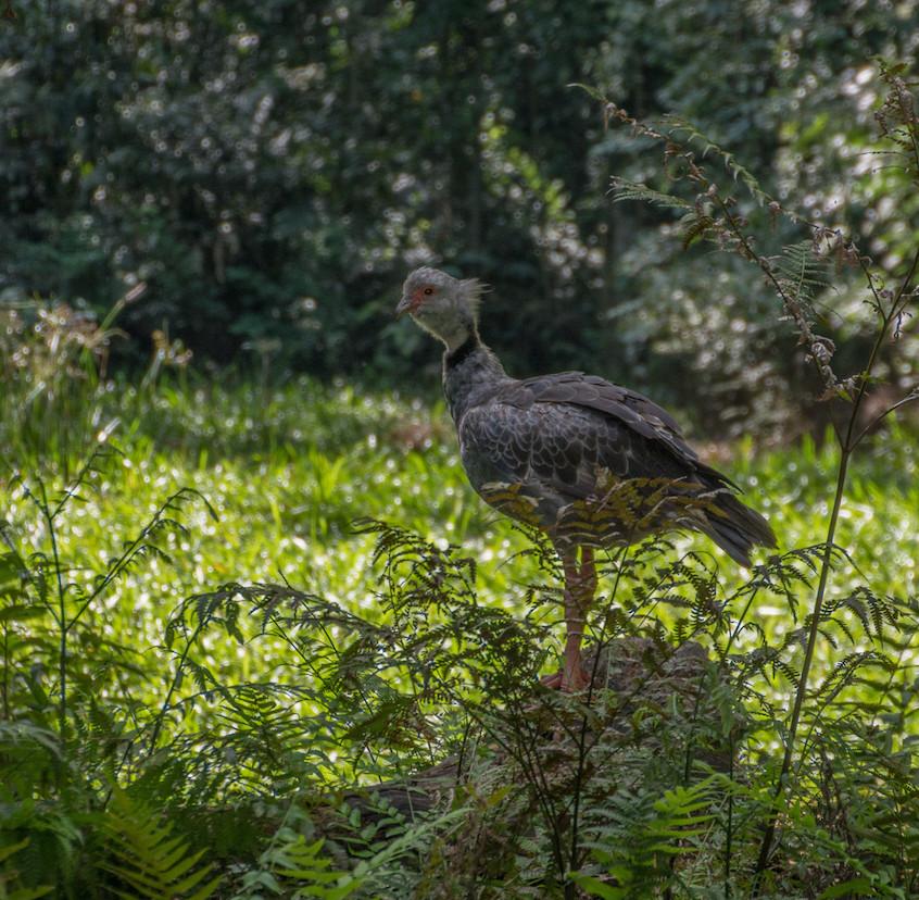 Brazil, Parque das Aves (9)