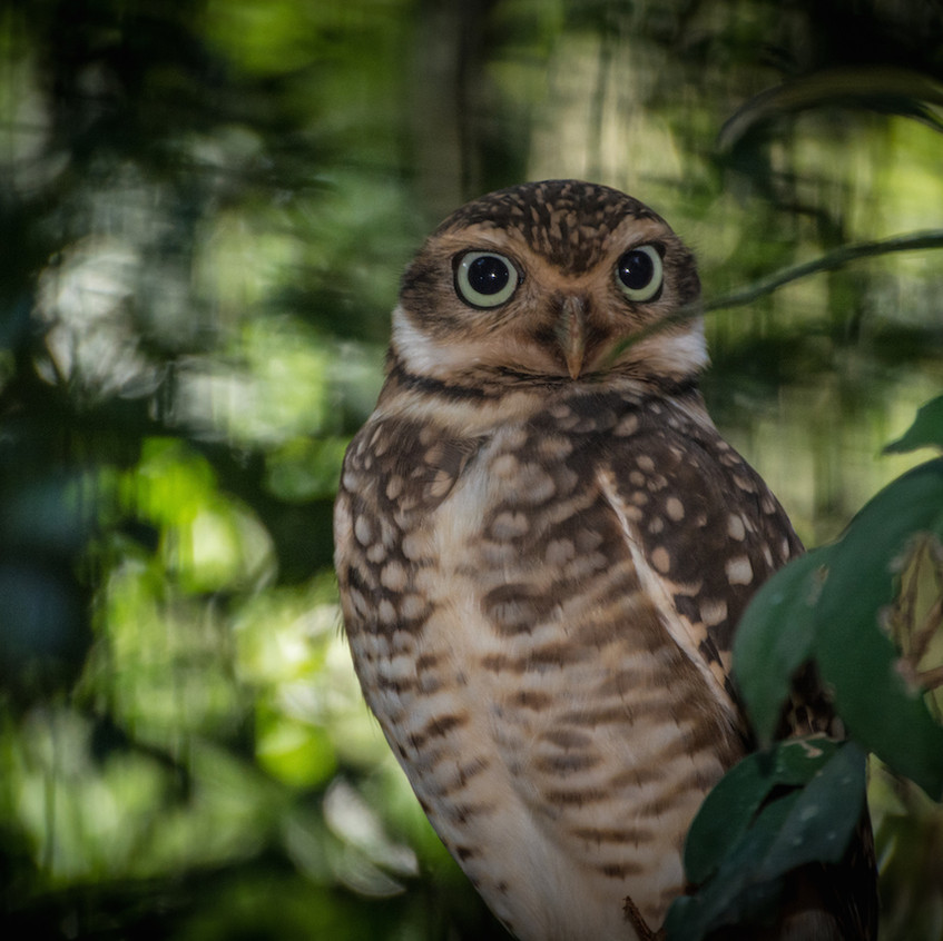 Brazil, Parque das Aves (11)