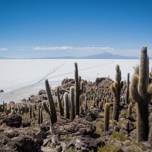 Bolivia, Salar de Uyuni; Isla Incahuasi (3)