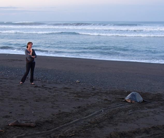 Costa Rica, Ostinal ; Olive Ridley Sea Turtle (6)