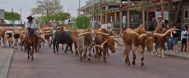 Fort Worth, Cattle Drive 2
