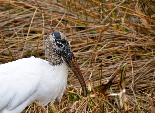 USA, Florida, Everglades (3)