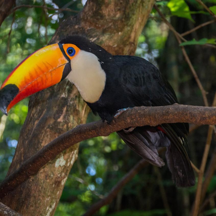Brazil, Parque das Aves (6)