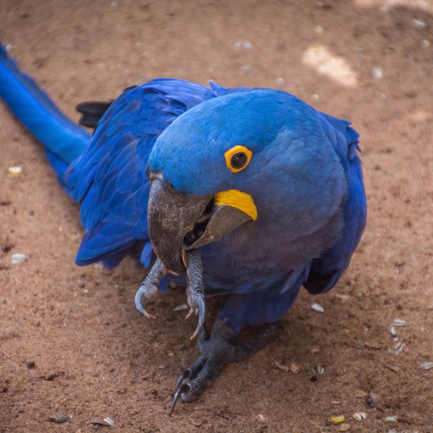 Brazil, Parque das Aves (10)