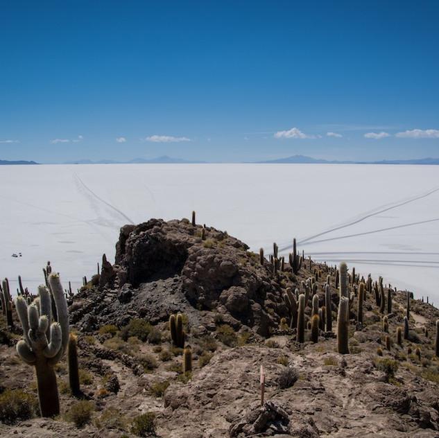Bolivia, Salar de Uyuni; Isla Incahuasi (2)