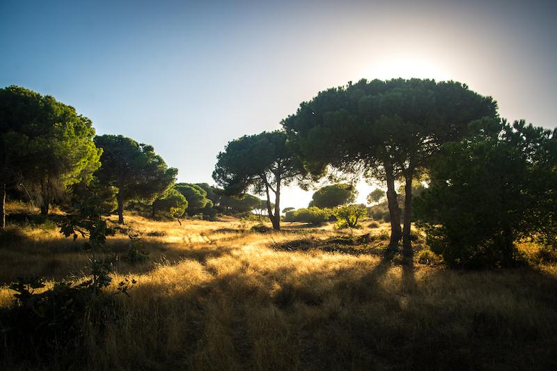 Portugal: Praia Falésia (6)