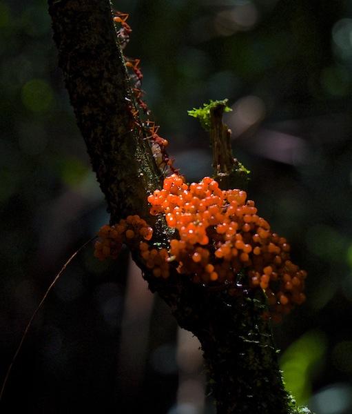 Costa Rica,Arenal Volcano National Park(7)