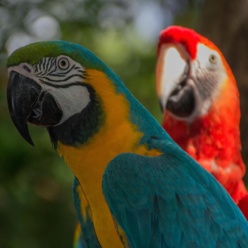Brazil, Parque das Aves (13)