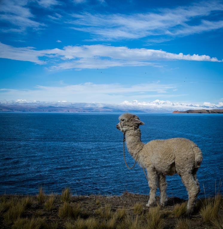 Bolivia, Isla del Sol (9)