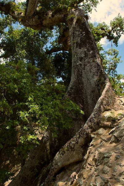 Honduras, Copan Ruines (6)