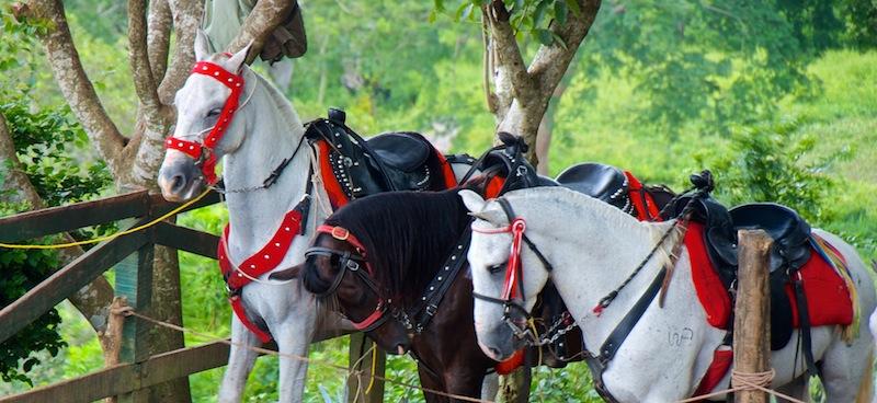 Laguna Apoyo; Horses