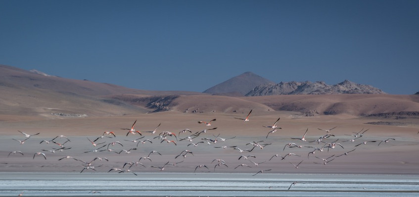 Bolivia, 3 day tour 'Region Lipez' (4)