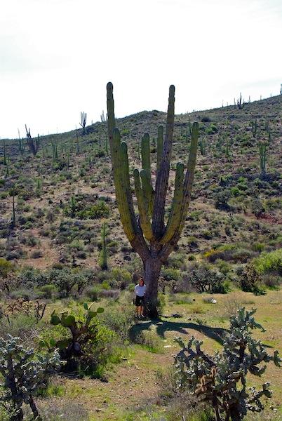 Mexico, Baja California Cataviña (1)