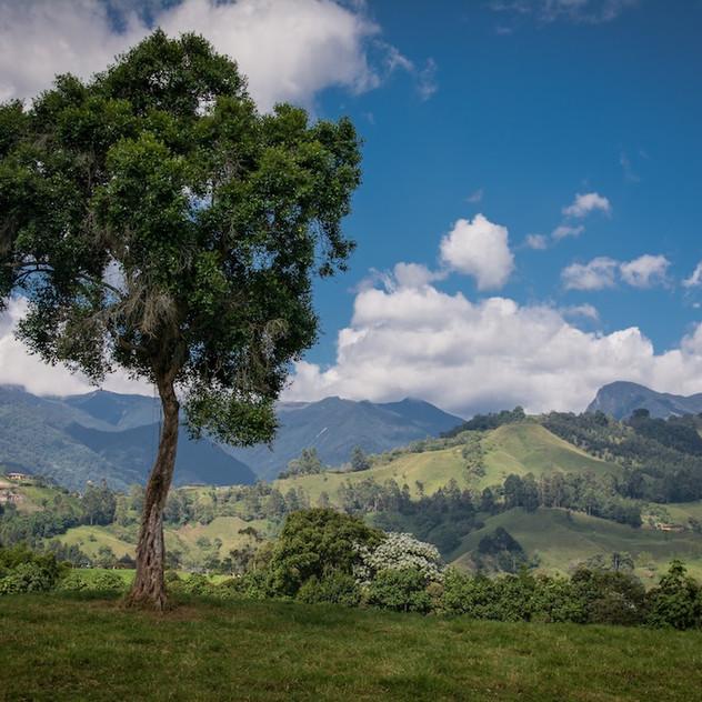 Colombia, Salento (8)
