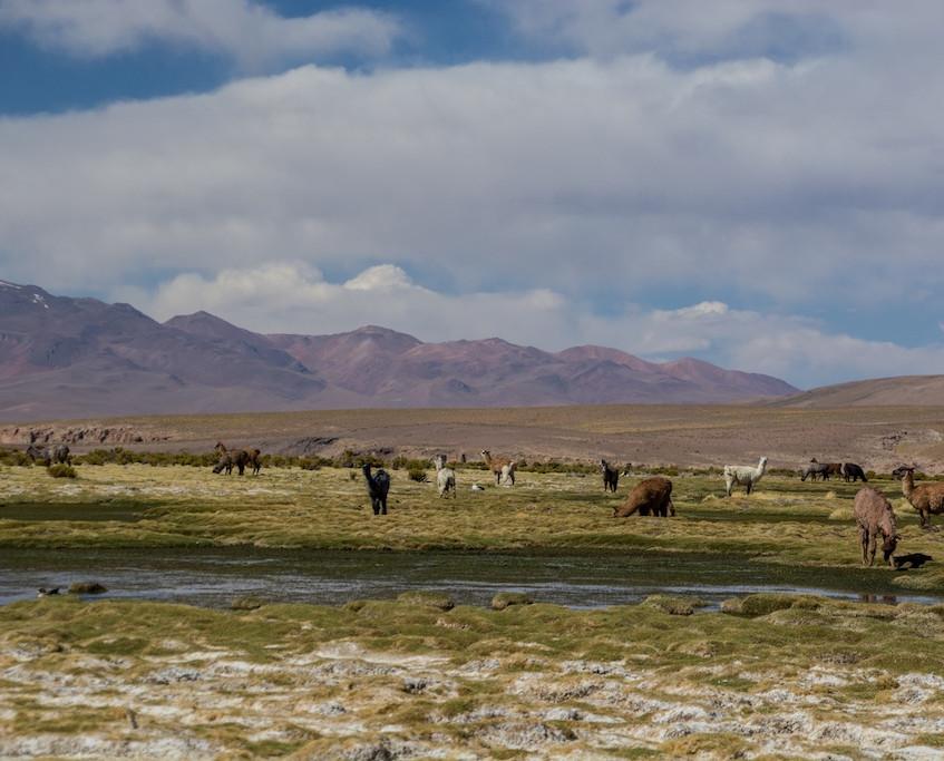 Bolivia, 3 day tour 'Region Lipez' (19)