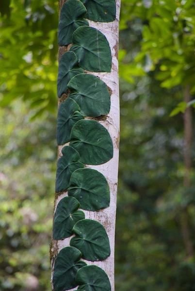 Costa Rica, Gandoca Manzanillo Wildlife Refuge (3)