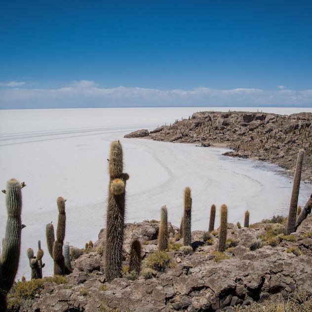 Bolivia, Salar de Uyuni; Isla Incahuasi (1)