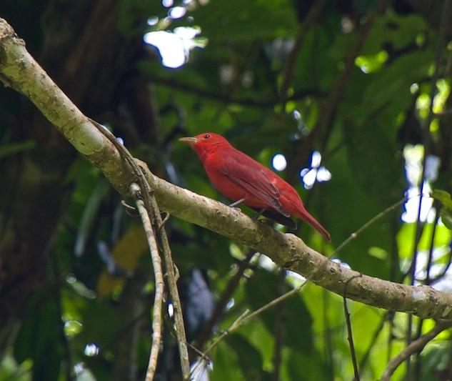 Costa Rica, Gandoca Manzanillo Wildlife Refuge (5)