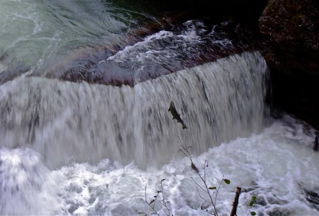 Canada, Stamp River Falls (1)