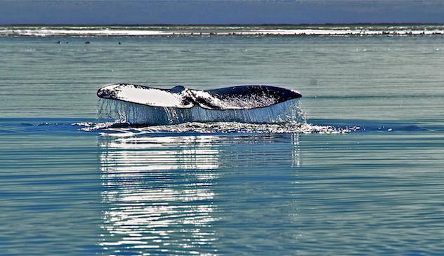Mexico, Baja California Sur, Ojo de Liebre Lagoon (5)