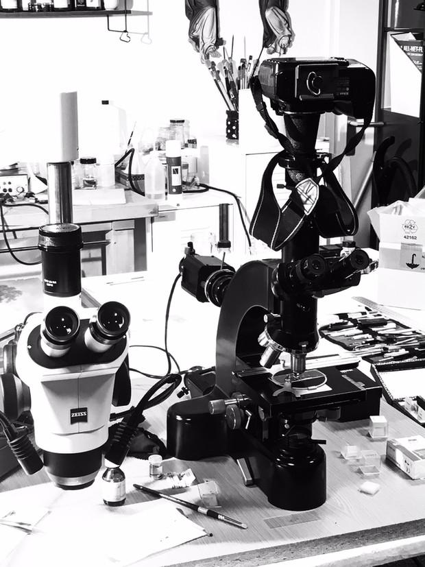 Mit dem Polarisationsmikroskop sind Pigment-, Textilfaser- und Holzanalysen möglich.