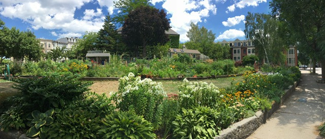 Gardens for Charlestown, one of the few open to the public