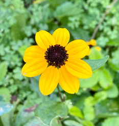 Little Yellow Flower.jpg