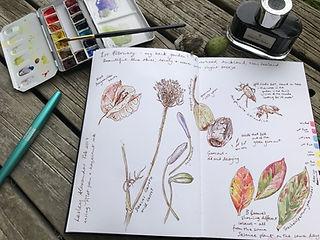 Nature journaling, winsor and newton watercolours, Stillman and Birn Zeta sketchbook