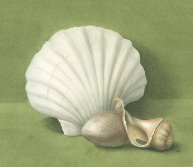 '2 Shells and an Egg'
