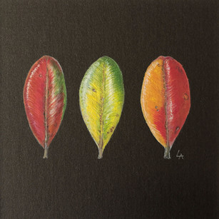 '3 Pohutukawa Leaves'