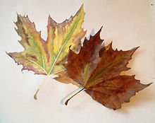 Lesley Alexander watercolour workshop_ed