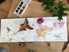 Nature journaling class at Kumeu Arts
