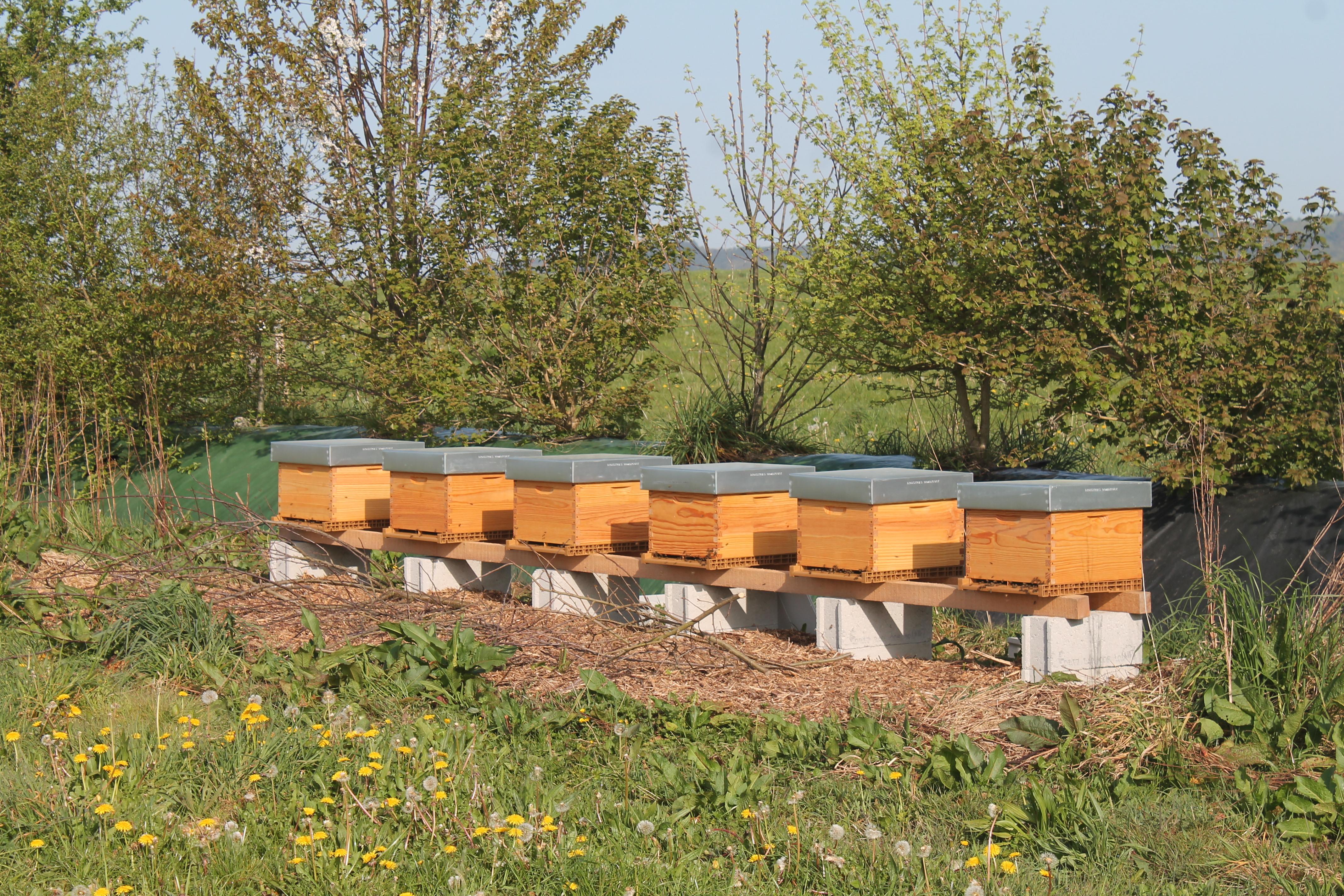 Les ruches du verger
