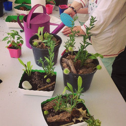 Mini-jardins à emporter