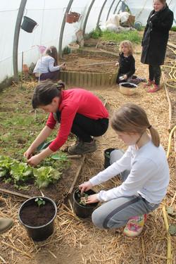 Apprendre à planter... tout un art!