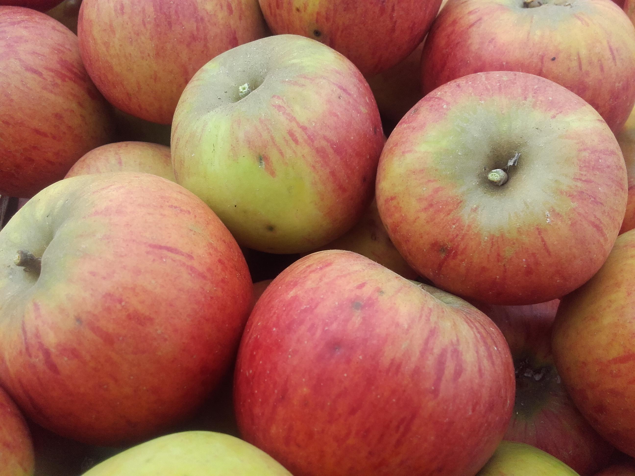 2018 : les 1ères récoltes de pommes