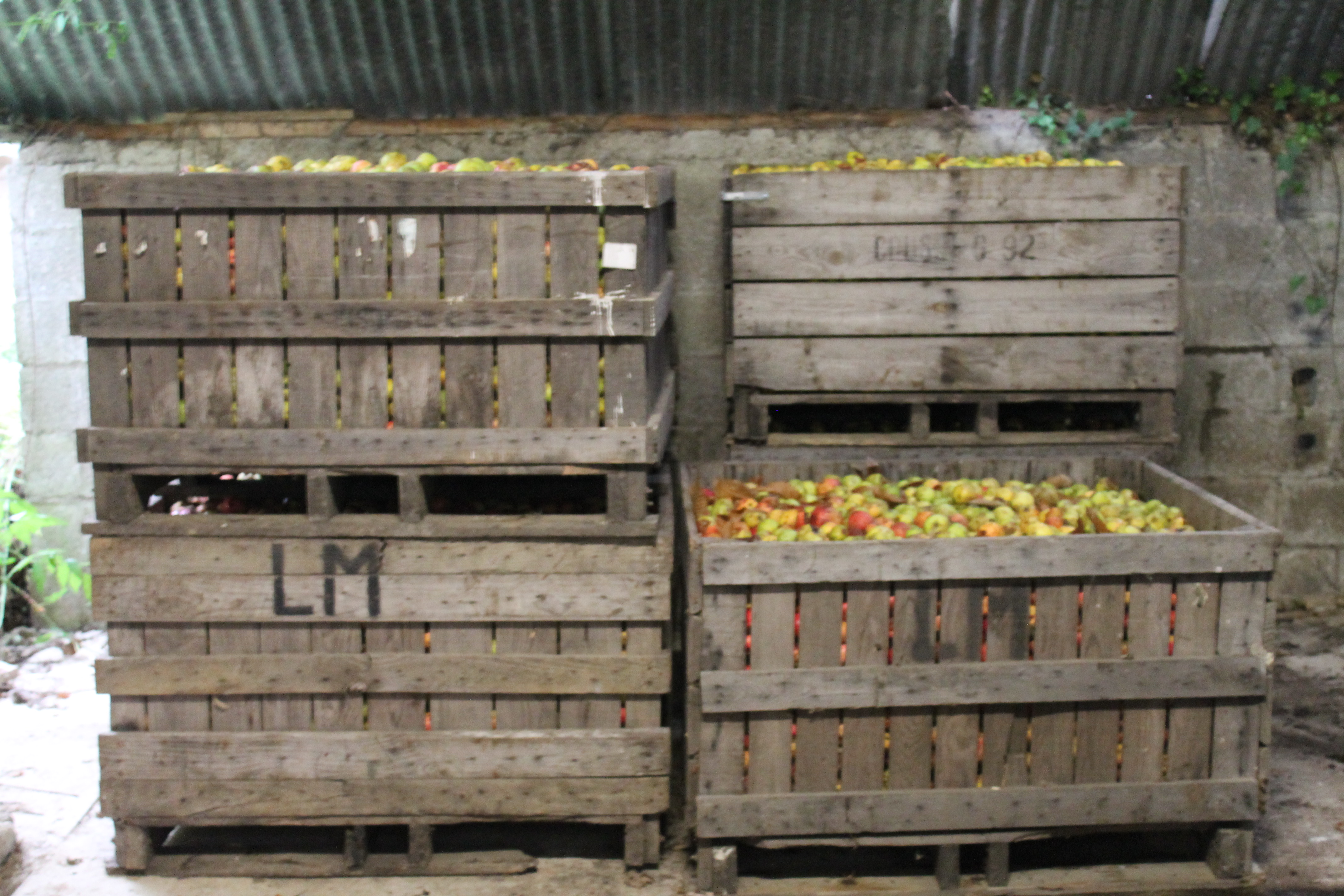 Les pommes à cidre