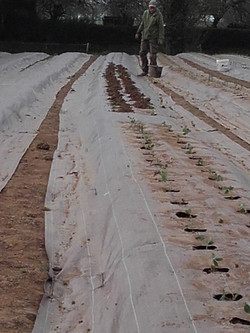 Chantier plantation