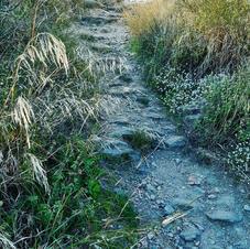 grasses rocky path