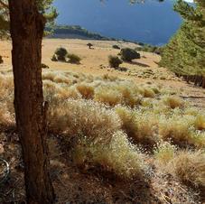 autumn grass alpujarra