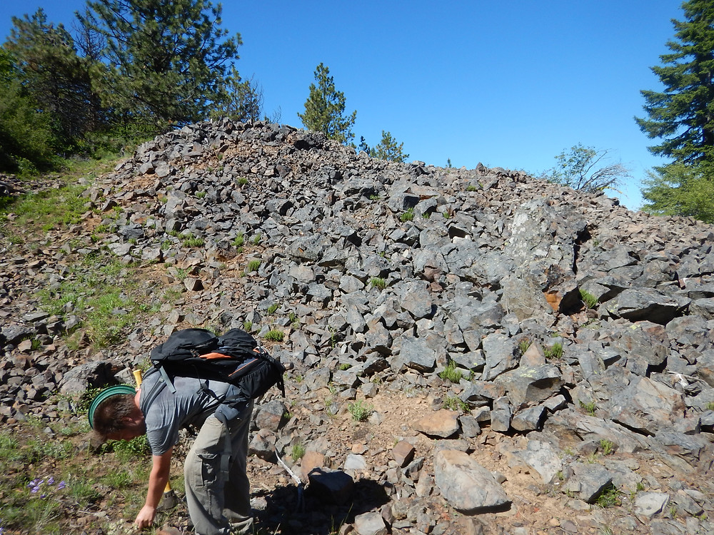 Figure 4: Former stranger, Nathan, of NW Rockhounds, picking through tailing pile at Red top Mountain.