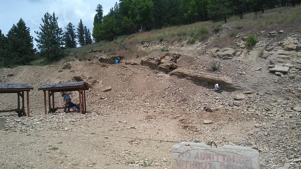 Figure 2: Dig site at Stonerose Interpretive Center, Republic, WA.