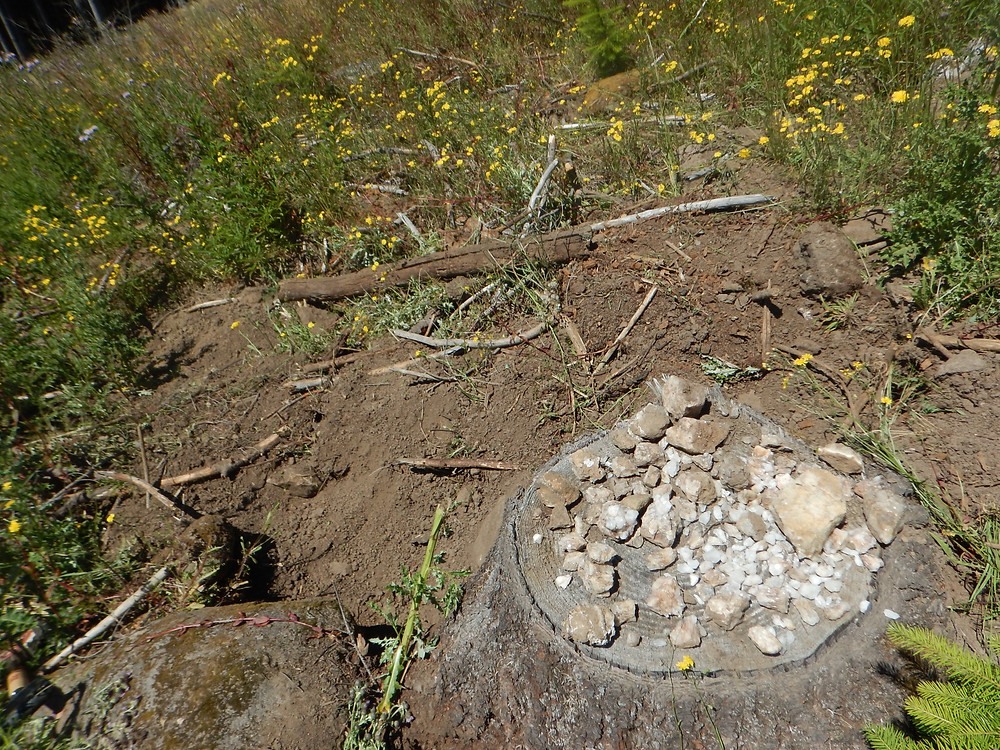 Figure 5: Left-over finds from previous diggers left on stumps around the clear-cut dig site.