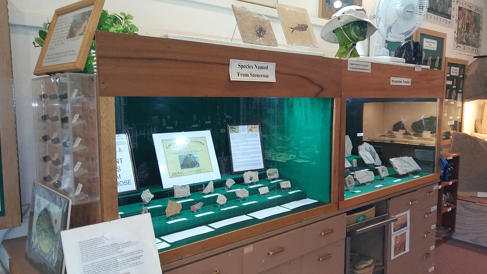 Figure 3: Display of notable scientific finds made by diggers at Stonerose dig site.