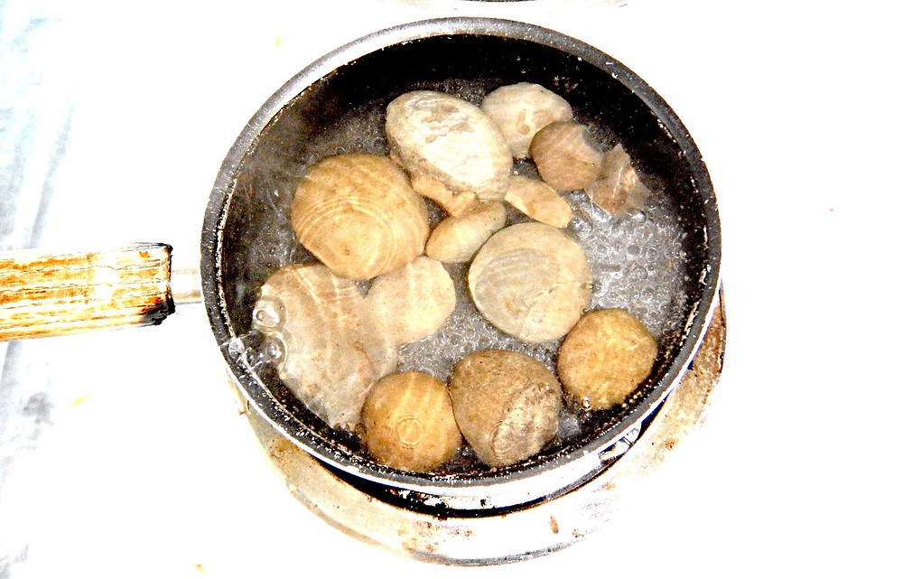 Figure 1: A pot of boiling water and fossil concretions.