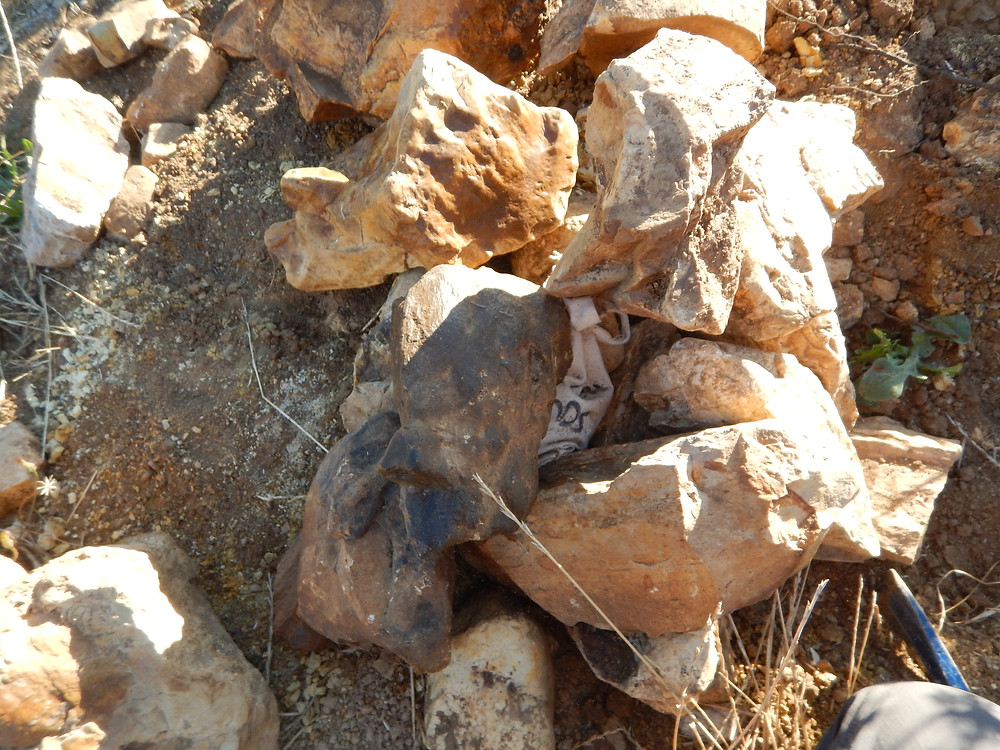 Figure 2: Hidden under this pike of petrified wood was my treasure bag 'o rocks.